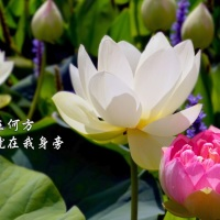 HEARTSTRINGS OF PRAISE:《在這個時候:祝福您》IN THIS MOMENT: A GIFT OF MELODY 10.09.2020