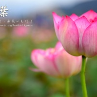 HEARTSTRINGS OF PRAISE:《在這個時候:祝福您》IN THIS MOMENT: A GIFT OF MELODY 31.10.2020